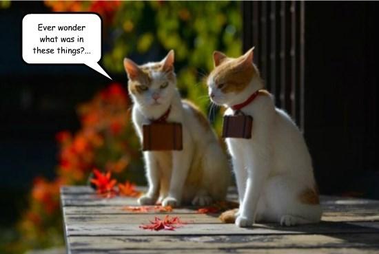 captions Cats funny - 8568708864