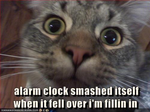 animals captions Cats funny - 8568711168