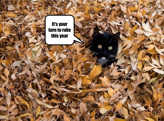 lolcats - Cat - It's your turn to rake this year