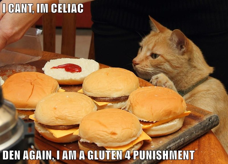 animals puns caption Cats funny - 8568753920