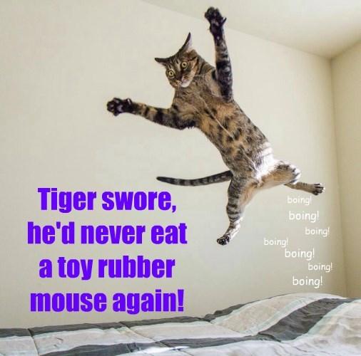 captions Cats funny - 8568819456