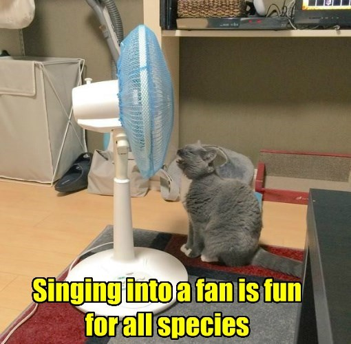 lolcats - Cat - Singing into a fan is fun for all species