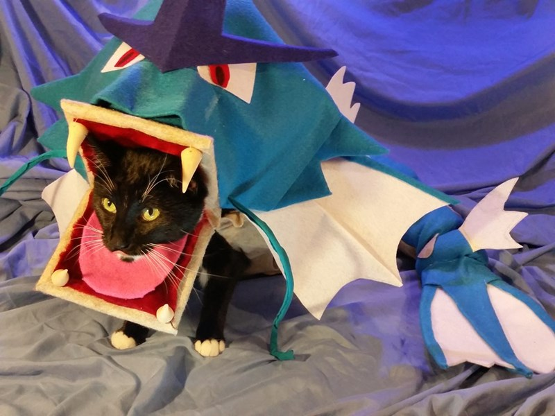 pokemon memes gyarados cat cosplay