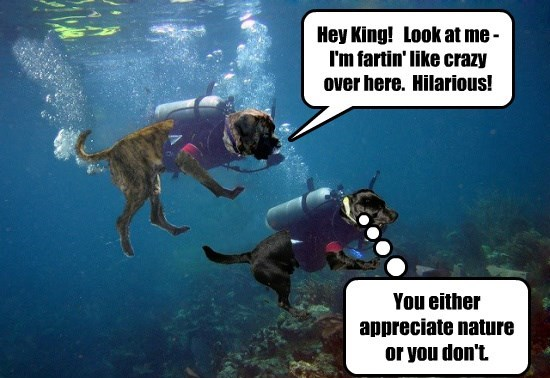 nature diving dogs farting caption appreciate