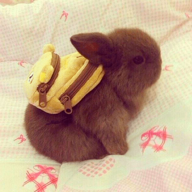 cute bunny image Ok, Mom, I'm Ready for School