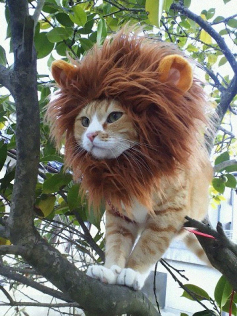 cute cats image King of the Jungle