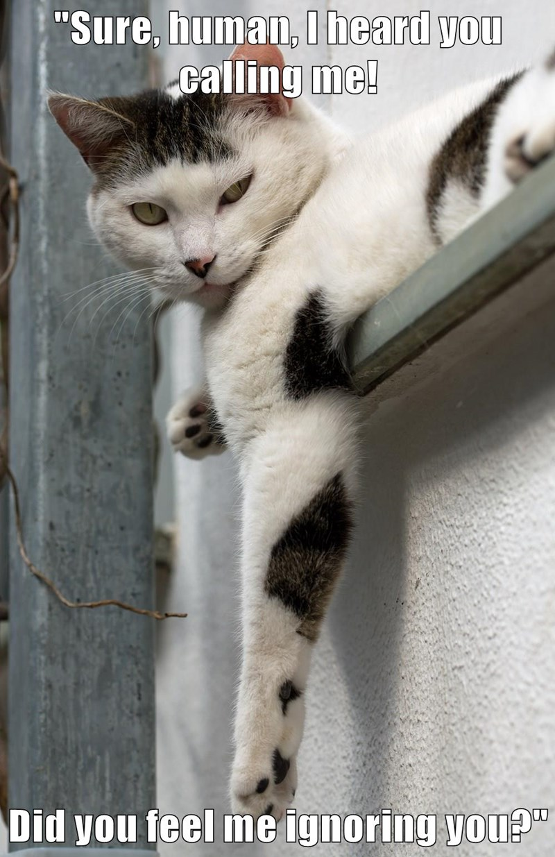 animals captions Cats funny - 8568946432