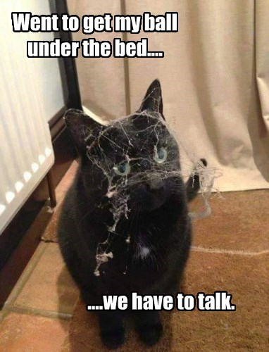 bed dust caption Cats funny - 8568999424