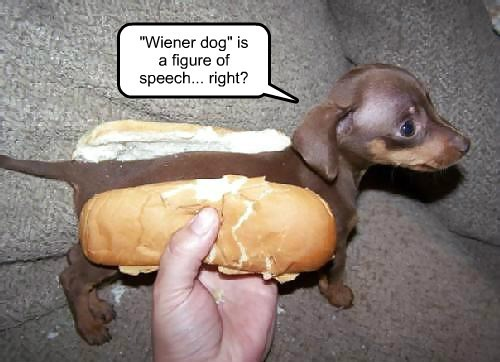 dogs captions funny