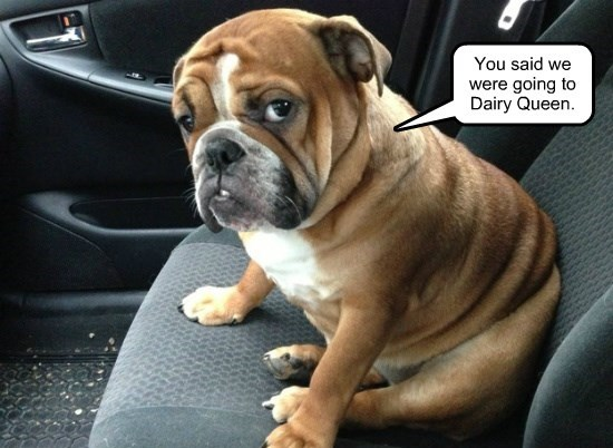 dogs captions funny - 8569050368