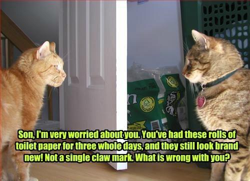 captions Cats funny - 8569156096