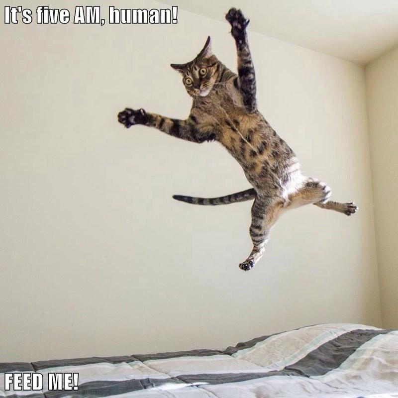 animals captions Cats funny - 8569241600