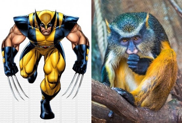 superheroes-monkey-looks-like-wolverine-meme