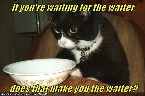 animals cat waiter waiting make caption - 8569382400