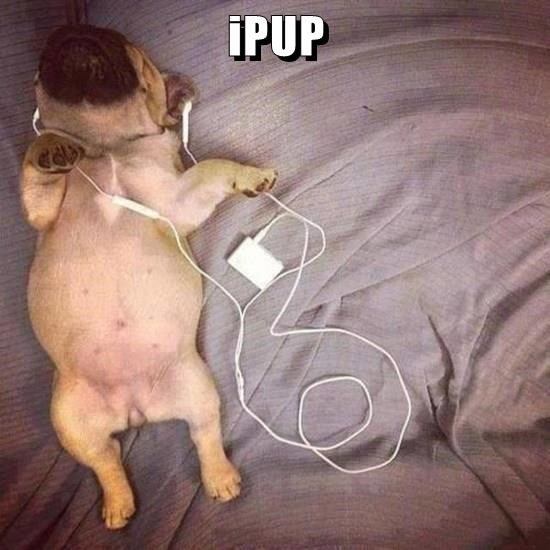 animals ipod puppy listening caption - 8569383936