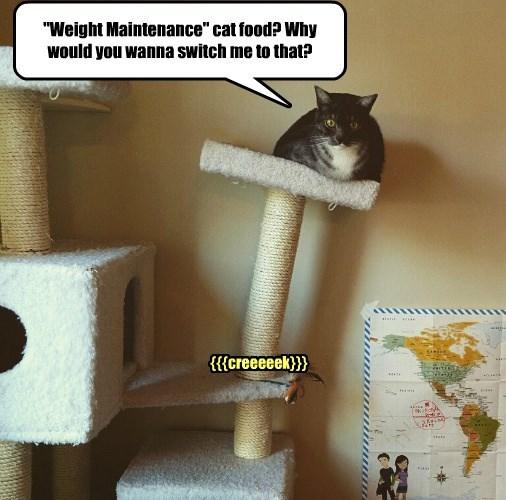 captions Cats funny - 8569386496