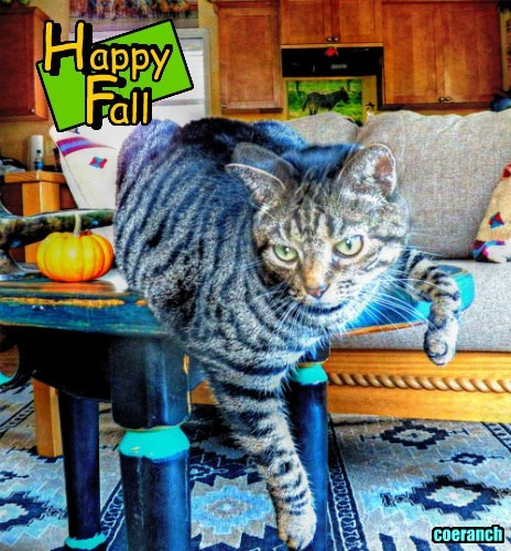 Ruffian says Happy Fall....