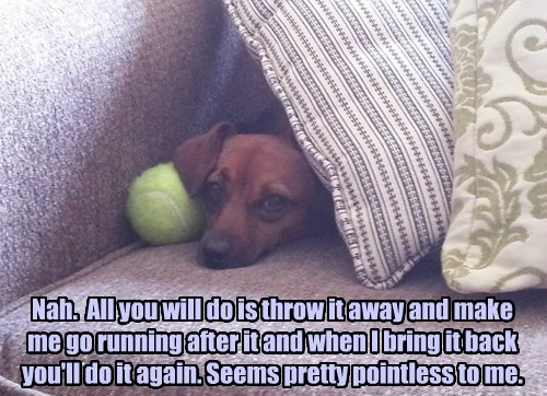 dogs captions funny - 8569449472