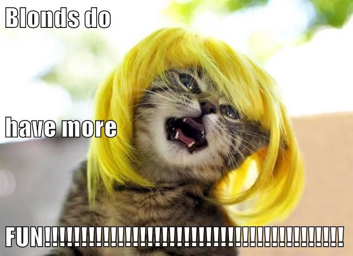 animals blond Cats captions funny - 8569474304