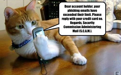 scams caption Cats funny - 8569528832
