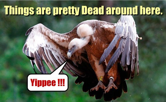 vulture captions funny - 8569537792