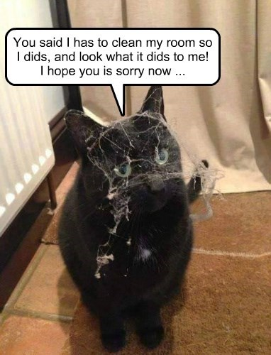 cleaning captions Cats funny - 8569563392