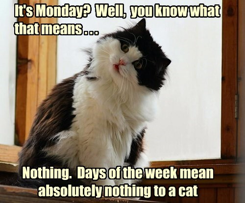 captions Cats funny monday - 8569657856
