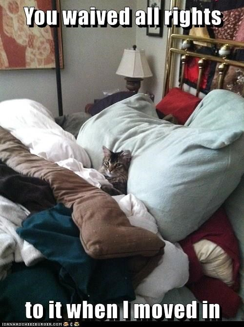 bed,captions,Cats,funny