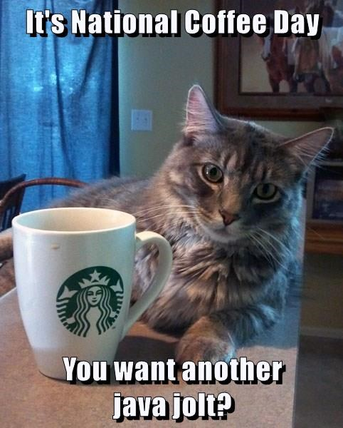 It's National Coffee Day  You want another                java jolt?