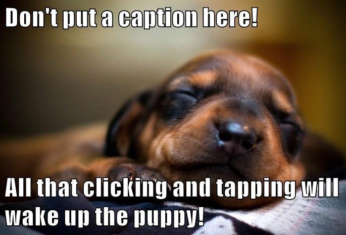 animals dogs cute caption - 8569817856
