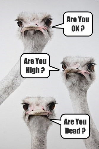 3 concerned Friends looking down at their Drunk Ostrich Buddy.