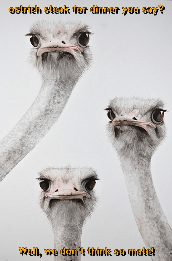 captions,funny,ostrich