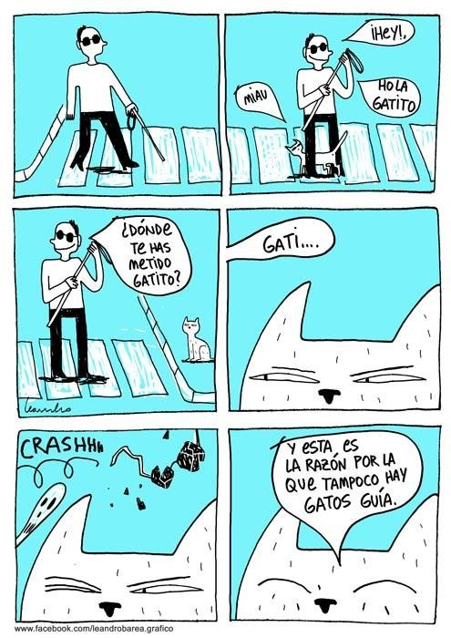 gatos guia