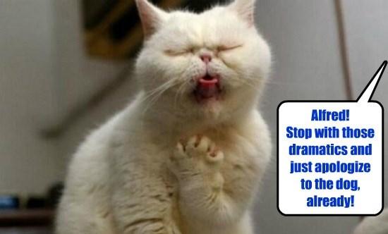 captions Cats funny - 8570275840