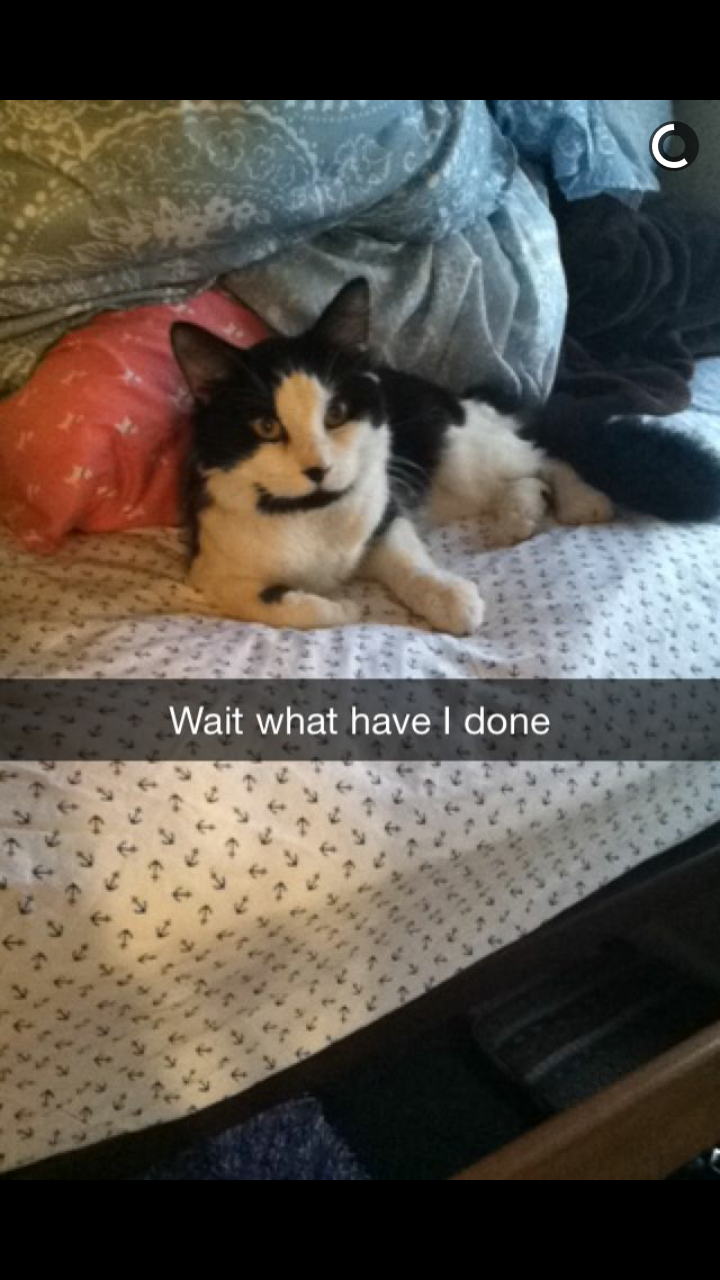 funny cats snapchat Congratulations! You Have a Cat Now