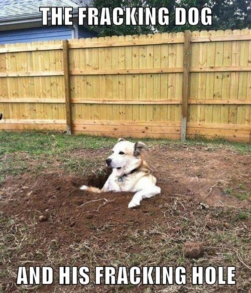 animals dogs captions funny - 8570424576