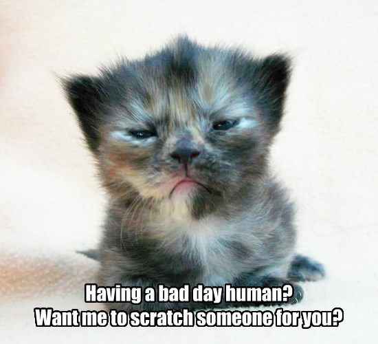 kitten caption Cats funny - 8570433024