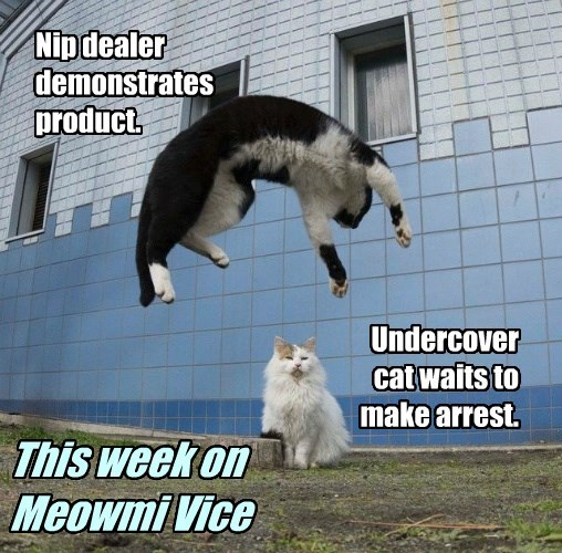 This week on Meowmi Vice.