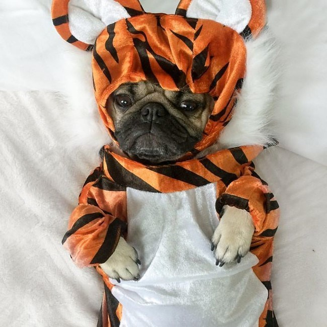 cute dogs costumes And Tigers, Oh My!
