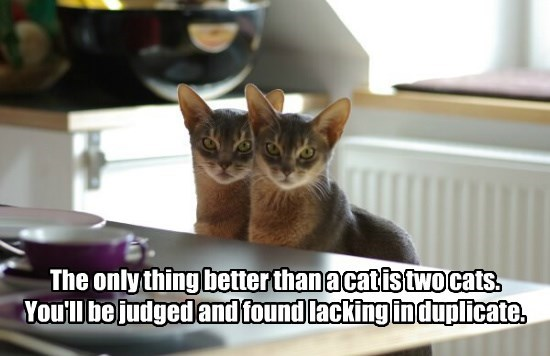 The only thing better than a cat is two cats. You'll be judged and found lacking in duplicate.