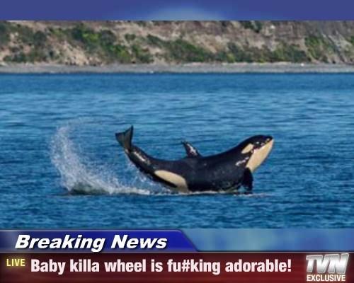 Breaking News - Baby killa wheel is fu#king adorable!