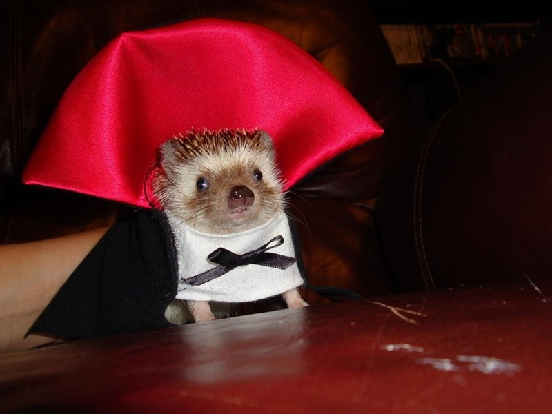funny hedgehog costume dracula