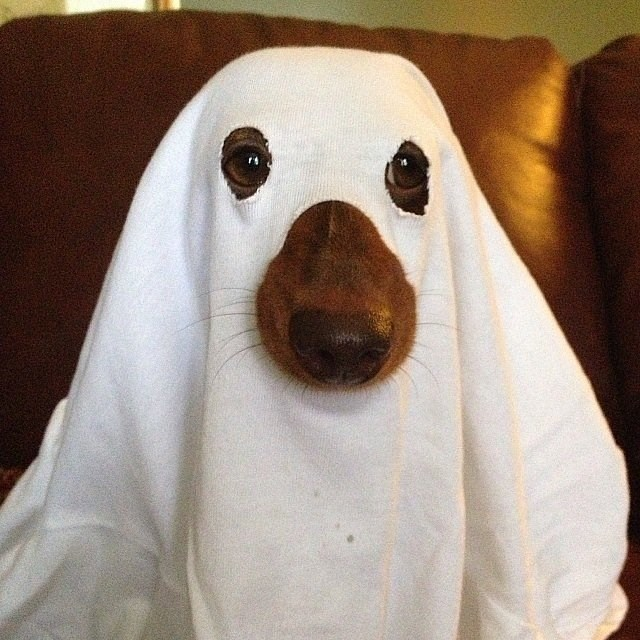 cute dogs costume ghost