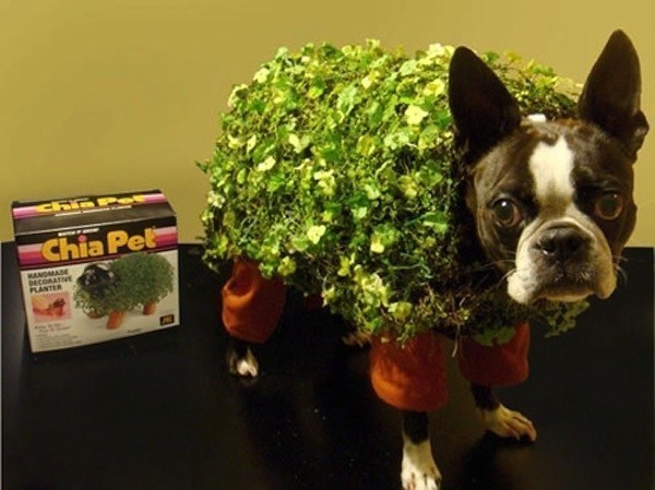 cute dogs costume chia pet