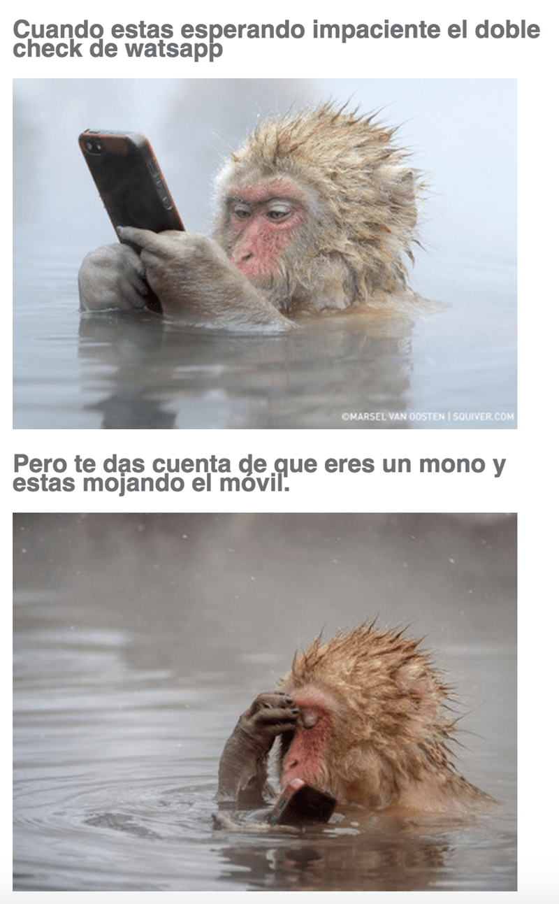 cuando eres mono