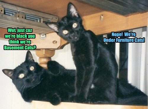 Wut, just cuz we're black you think we're Basement Cats?