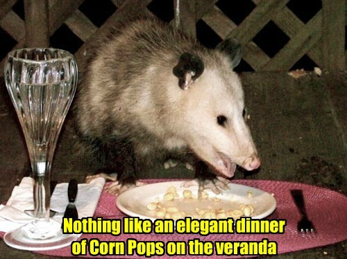 possum,captions,funny,dinner