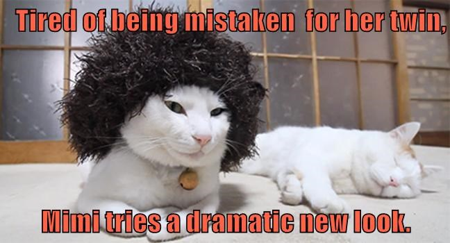 animals lolcats mistaken new look twins caption dramatic - 8570736128