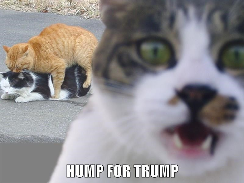 HUMP FOR TRUMP