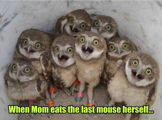 When Mom eats the last mouse herself...